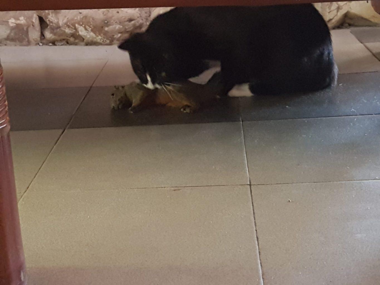 Oreo mit Eichhörnchen