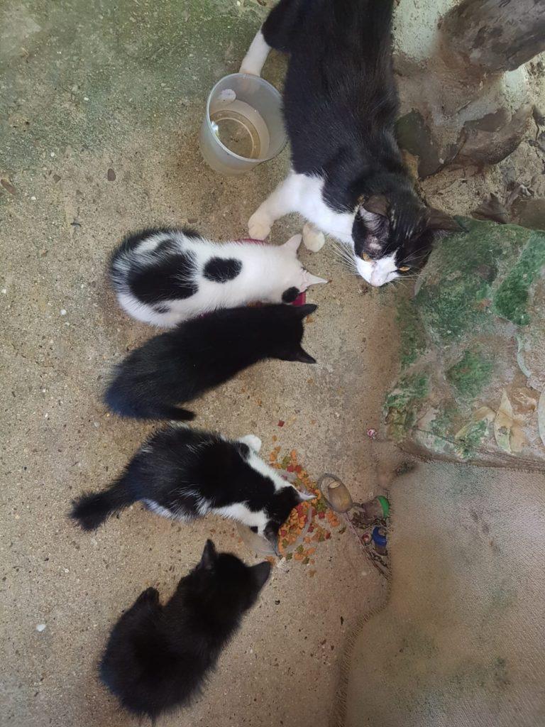 Katzen im Qimi Resort