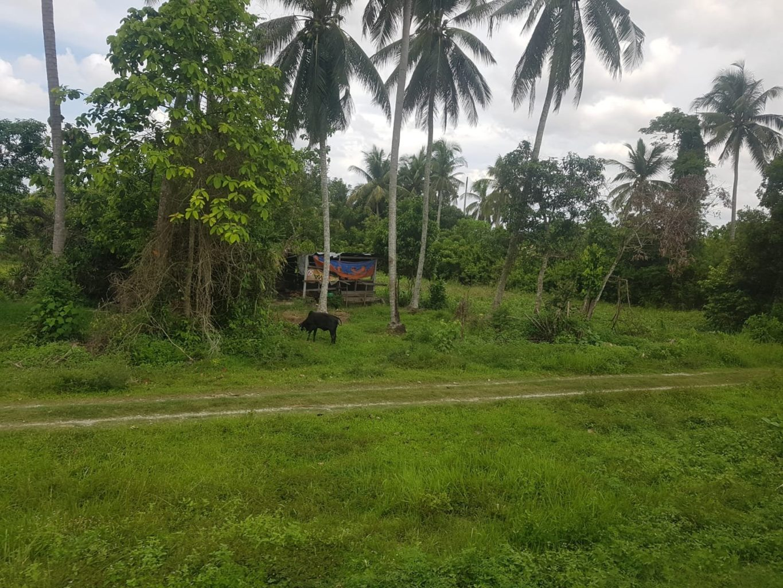 Fahrt mit dem Dschungelzug