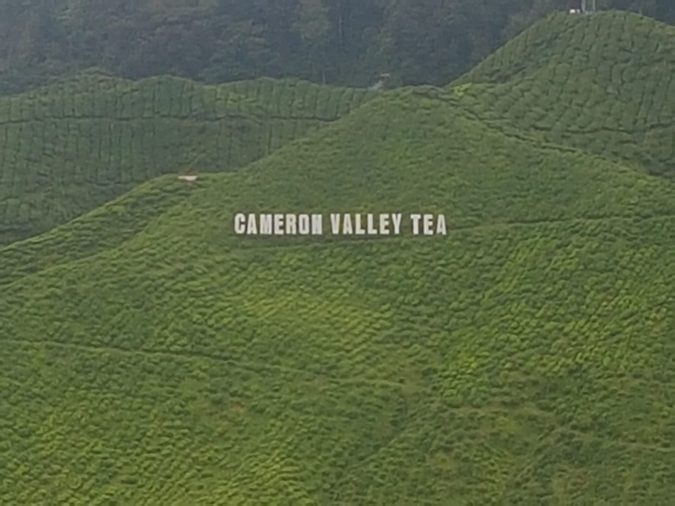 Cameron Valley Tea