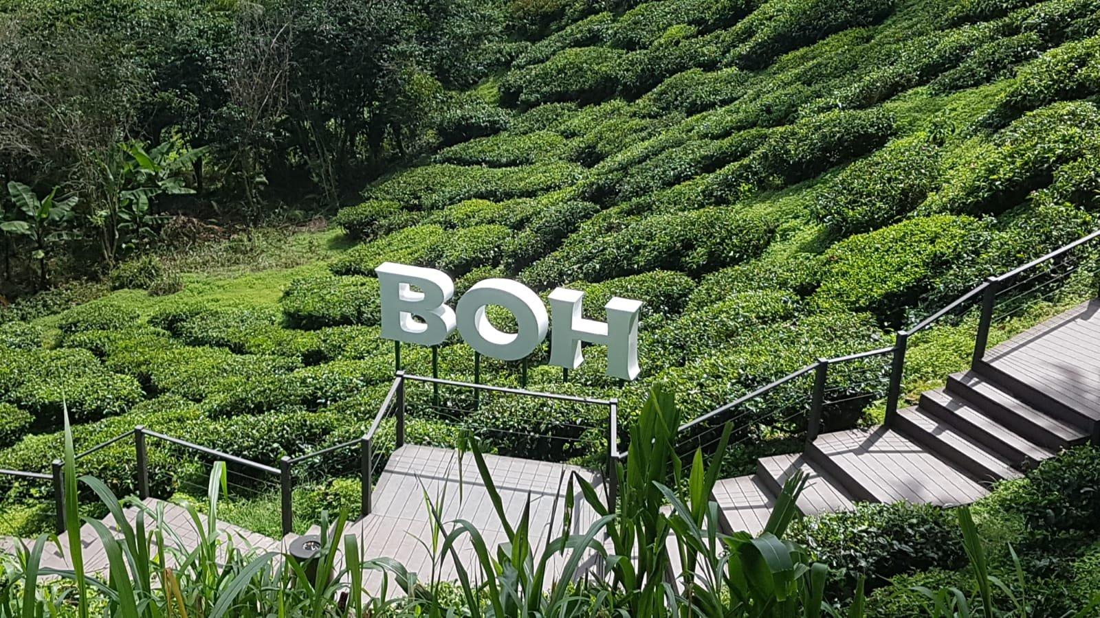 BOH-Teeplantage