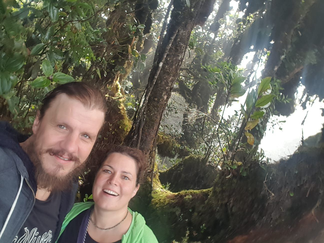 im Mossy Forest
