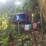 Leben im Dschungel auf Perhentian