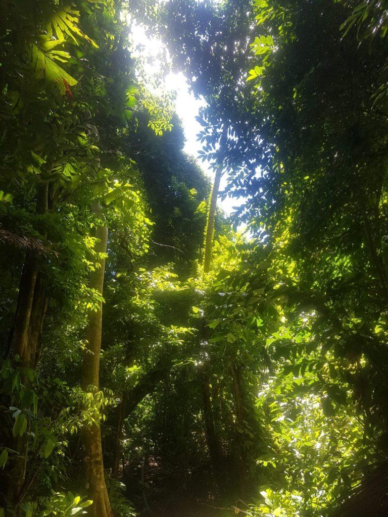 Dschungel Pulau Perhentian